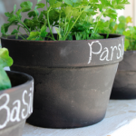 7 Herbs You Can Easily Grow At Home