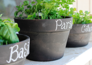 7-herbs-to-grow-at-home